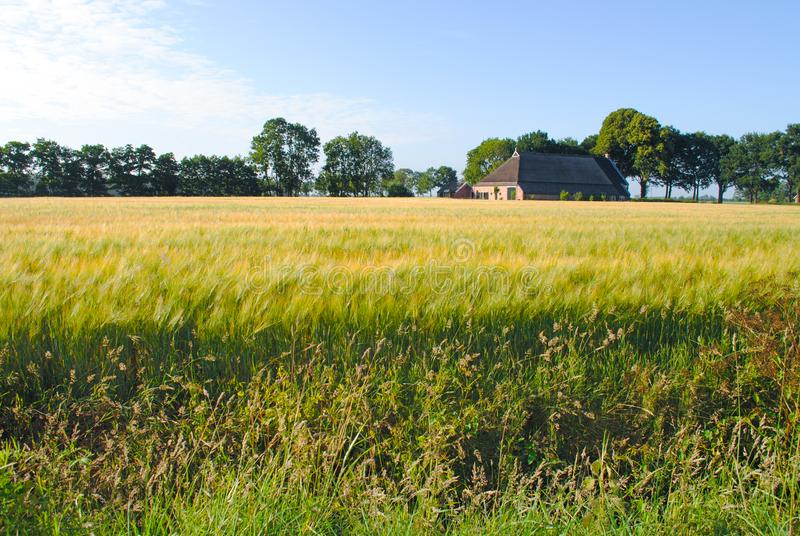 Photo of Grass Field royalty free stock image