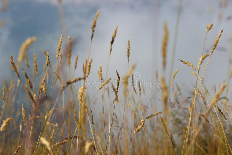 photo of grass in the mountains royalty free stock photography