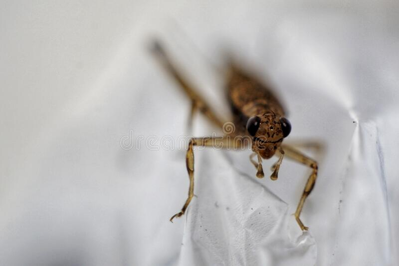 A grasshopper with white isolated royalty free stock photos