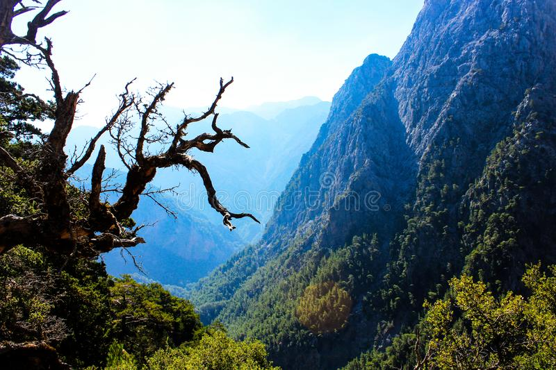 Photo of Greece. Crete. The gorge of Samaria. The image shows a dried tree and mountains. Walking tour. stock images