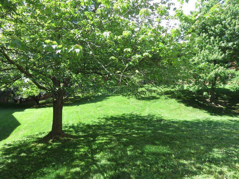 Green Grass and Trees in the Neighborhood royalty free stock photography