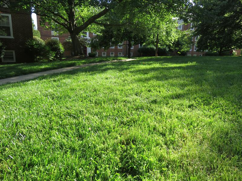 Green Grass and Trees in the Neighborhood in Spring royalty free stock images