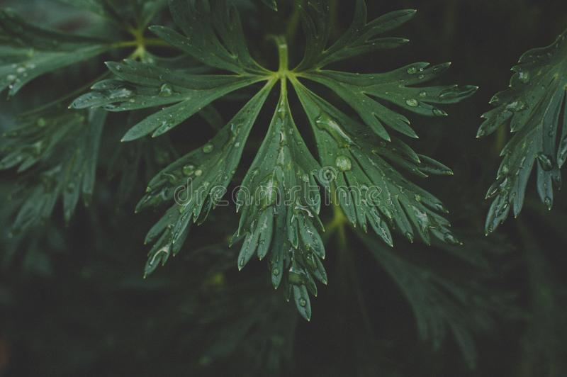 Photo Of Green Leaf With Drops Of Water royalty free stock images