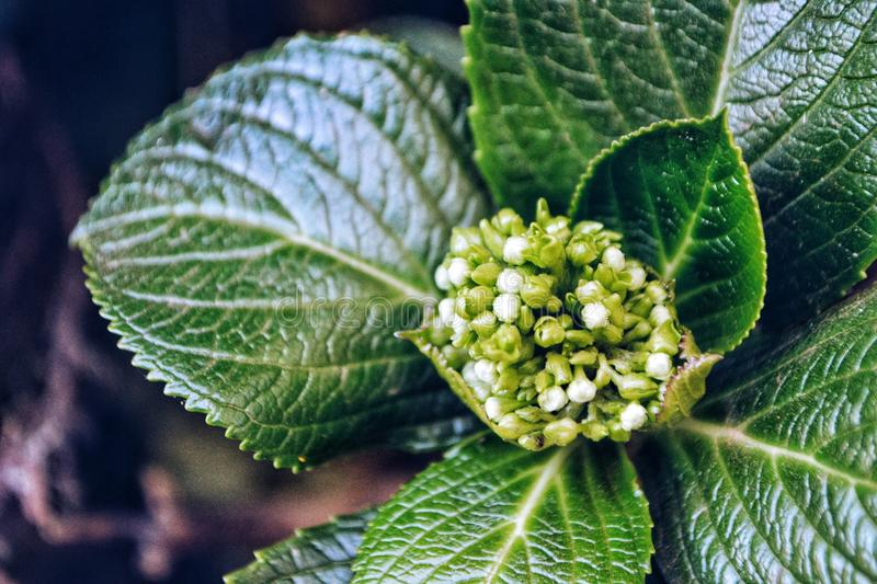 Photo of Green Leaf Plant royalty free stock image