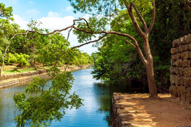 Photo of Green Leaf Tree Beside River royalty free stock images