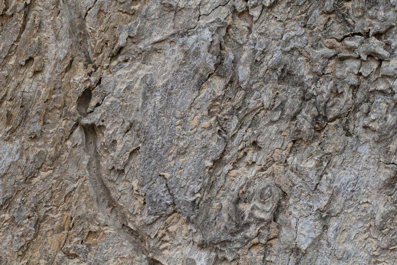 Photo grunge de texture d'écorce d'arbre Vieux fond en bois d'écorce Arbre forestier tropical avec l'ornement naturel photographie stock