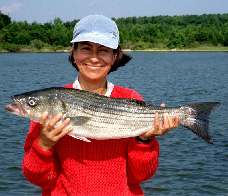 Woman With 10 LB Striped Bass stock photo