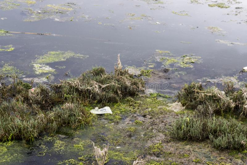 A View from Swamp Area - Moss and Garbage stock images