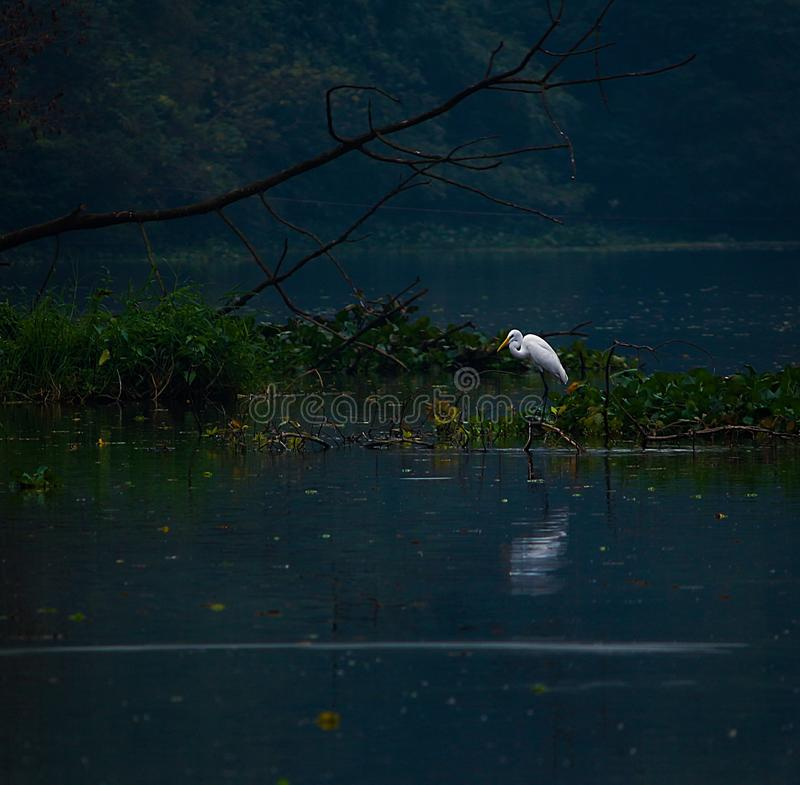 Photo Of A Heron On Body Of Water Free Public Domain Cc0 Image