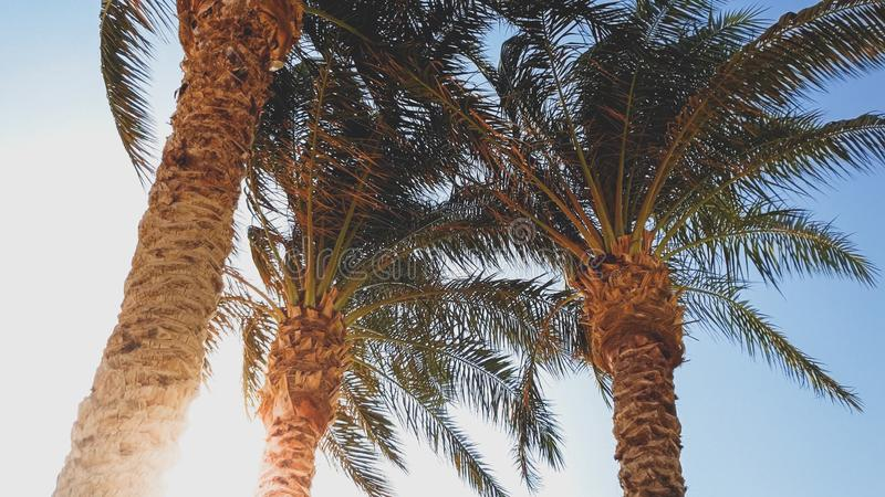 Photo of high palm trees on the beach against blue sky and bright sun. Photo of high palm trees on beach against blue sky and bright sun stock photos