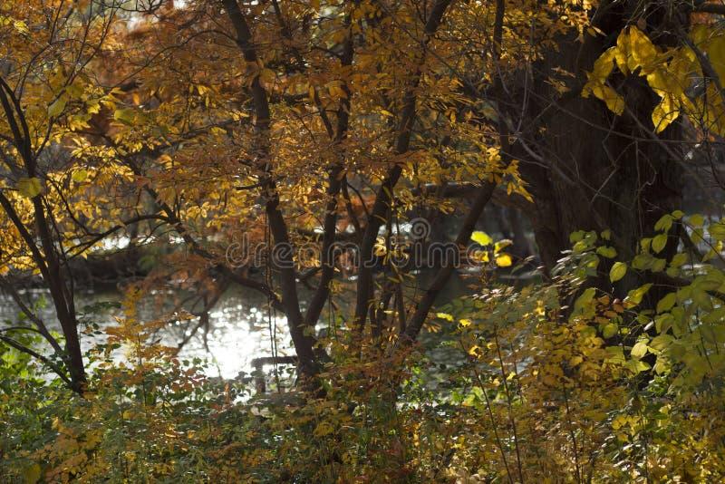 Photo horizontale des arbres oranges de chute et des buissons devant l'eau photos stock