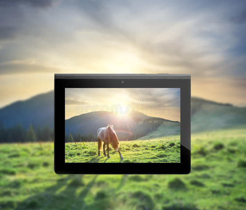 Photo horses under the setting sun on plate royalty free stock photography
