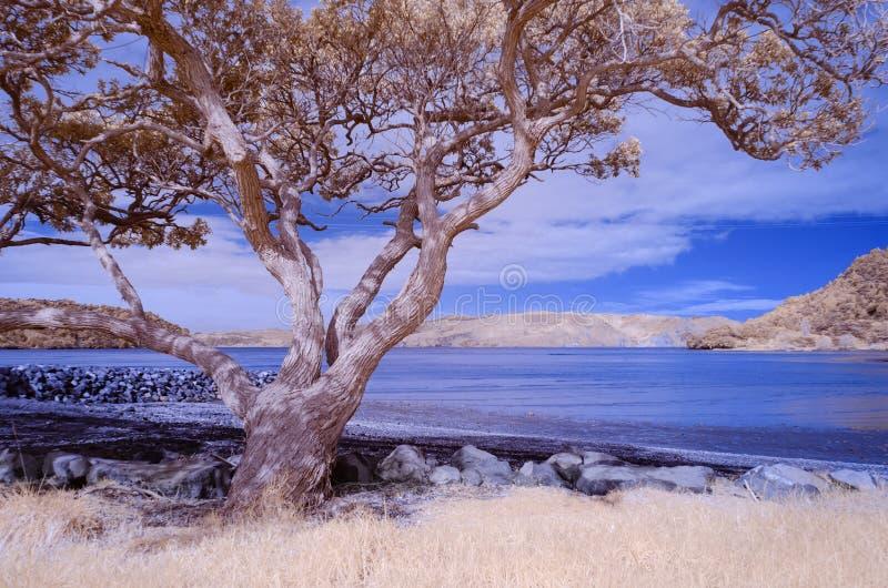 Photo infrarouge d'un paysage de plage avec un arbre dans le foregroun images libres de droits