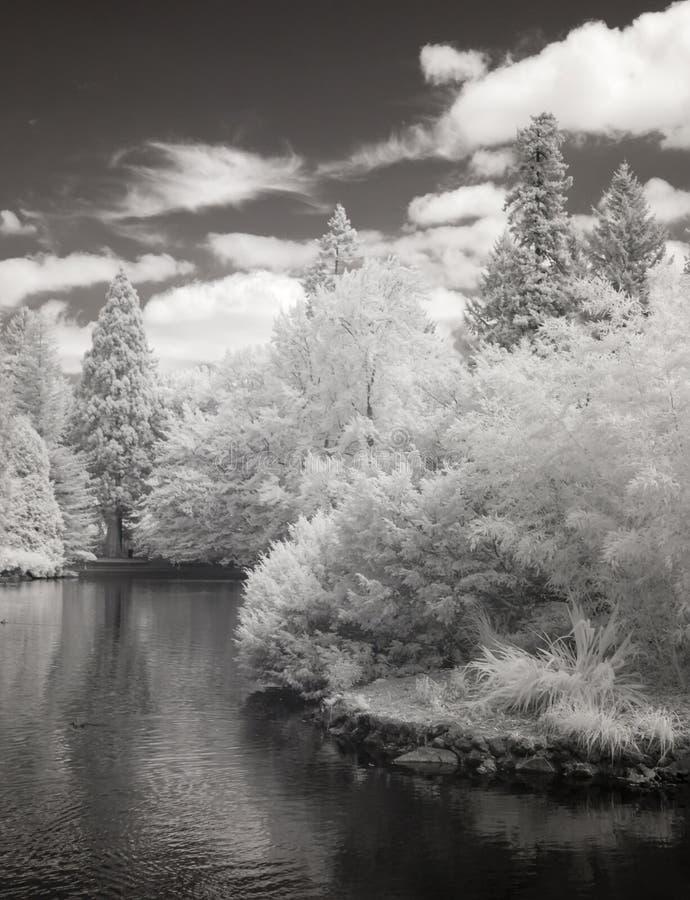 Photo infrarouge de l'étang de canard au stationnement de Laurelhurst à Portland, photographie stock libre de droits