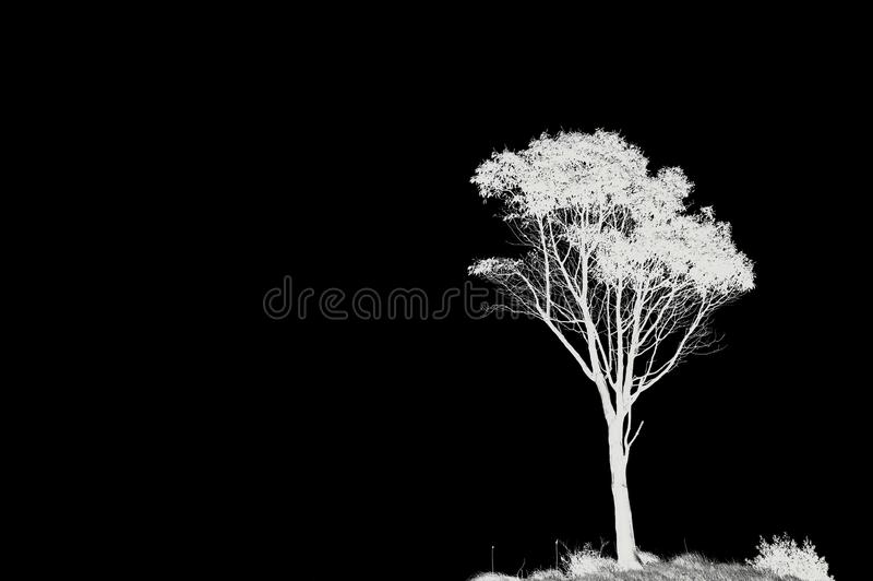 Copy-space and lone tree. Photo inverted black and white of a lone tree with copy space stock photography