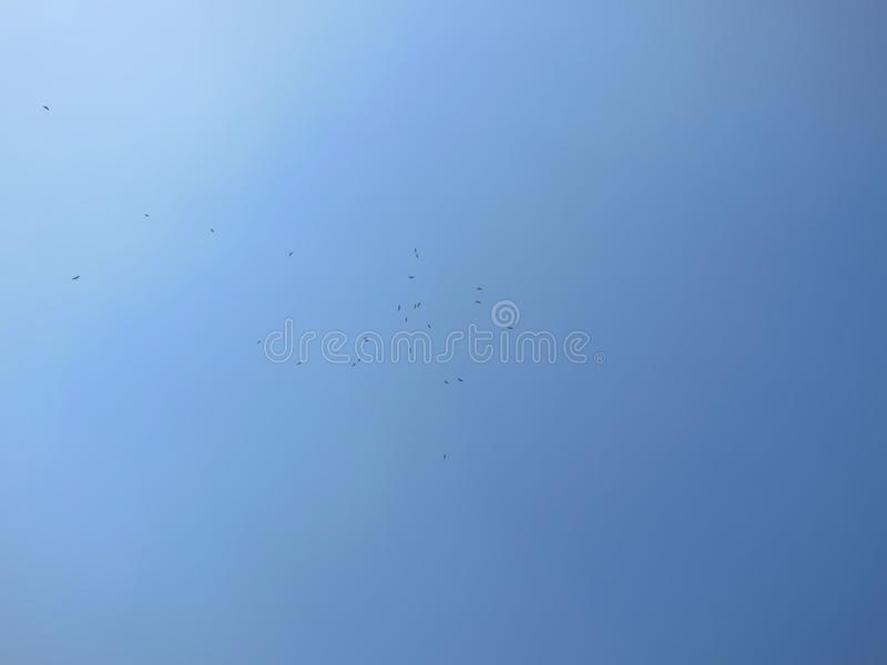 Photo large du groupe d'aigles volant haut en beau ciel bleu profond un jour ensoleillé clair photographie stock