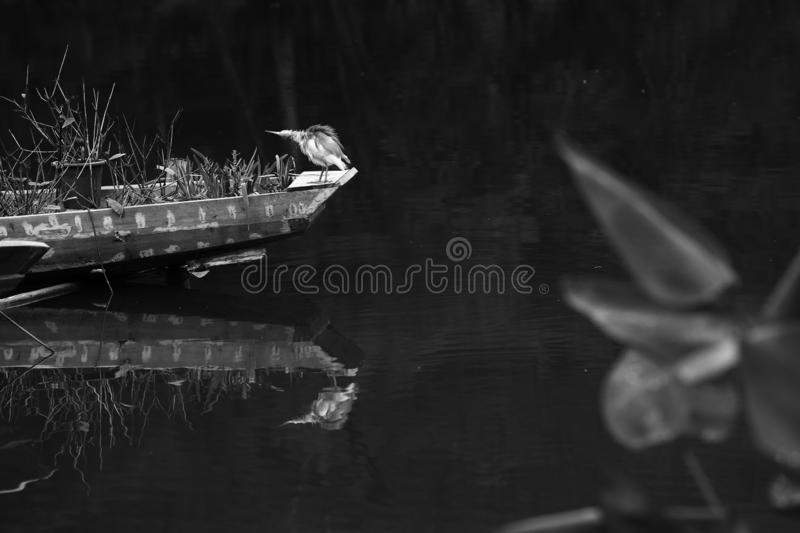 Little egret on a chinese traditional fishing boat on a lake, park, Shenzhen, China,black and white stock images