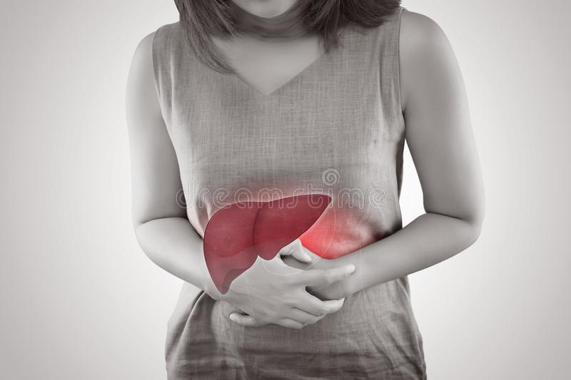 The Photo Of Liver On Woman Body stock image