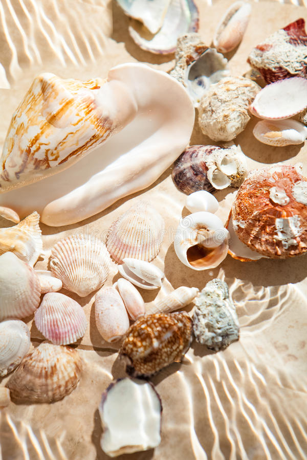 Photo of lots of seashells lying underwater royalty free stock photo