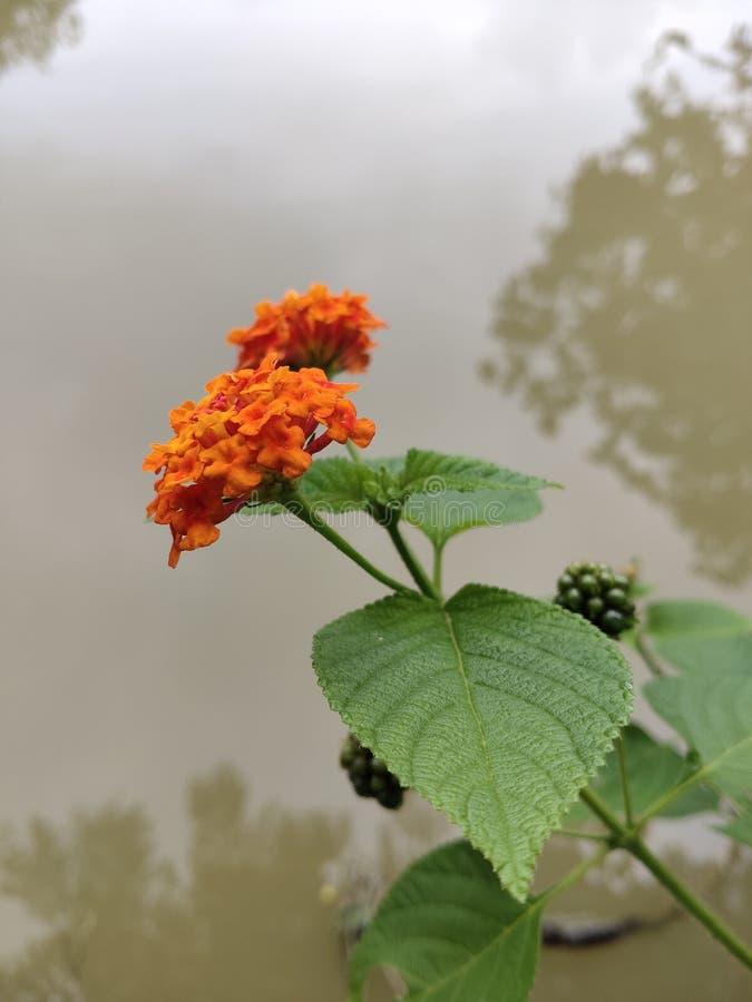 This photo Lovely shrub naturally. Beautiful stock photos