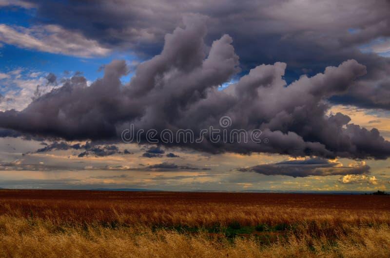 Photo météorologique - congestus de cumulus au-dessus du champ d'agriculture photographie stock