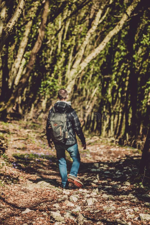 Photo of Man Walking in the Forest stock photo