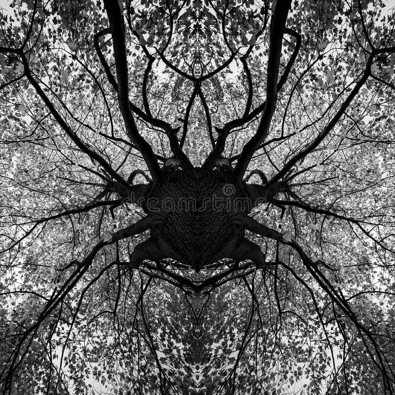 Download photo manipulation tree black and white mandala stock photo image of outdoor