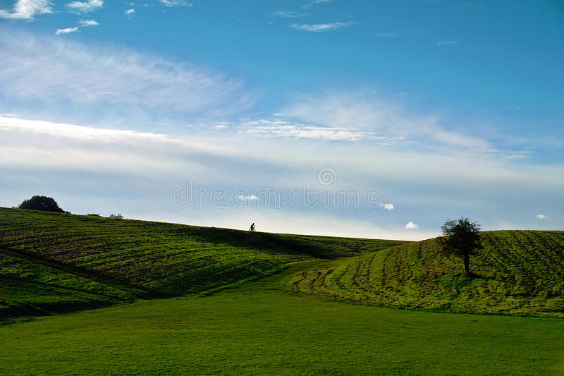 Photo of the meadow royalty free stock image