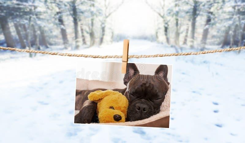 Photo mignonne de chien sur la ficelle en hiver photo stock
