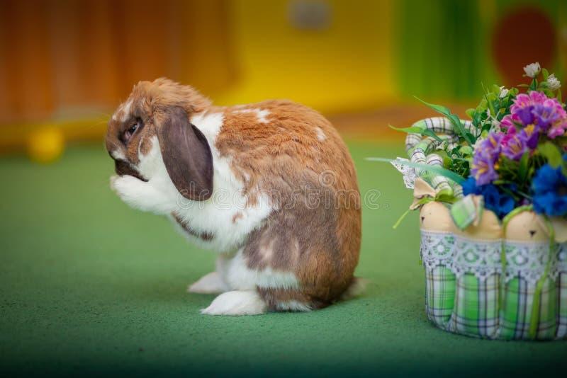 Photo mignonne de lapin Fond animal image stock