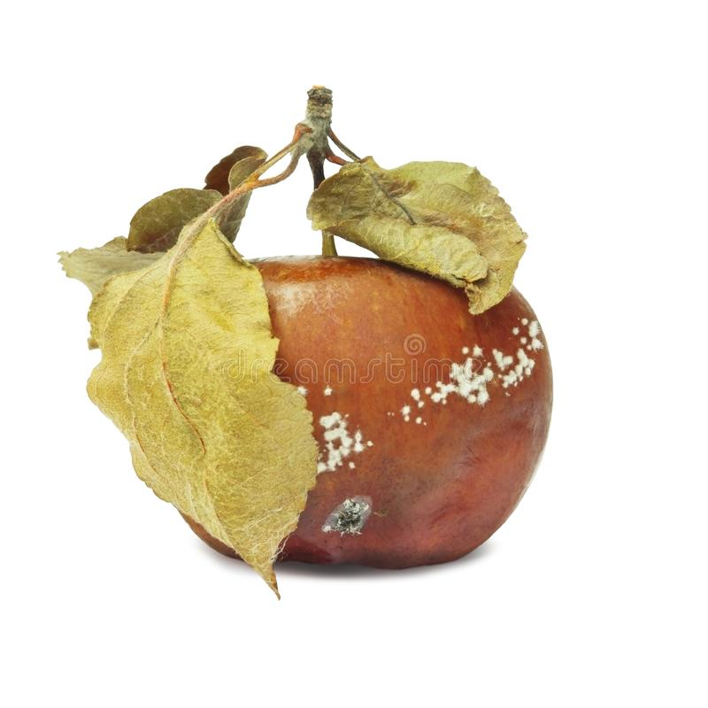 A photo of mold growing on the old apple isolated on white background. Food contamination, bad spoiled disgusting rotten organic a stock photos