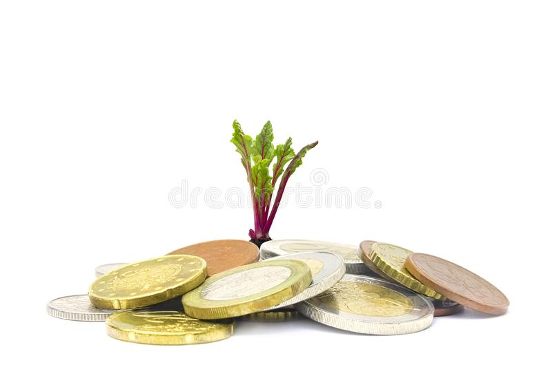 A photo of money, heap of euro coins and a small green sprout growing from the coins. Business finance concept. Coins on. White. Jewish charity concept royalty free stock image