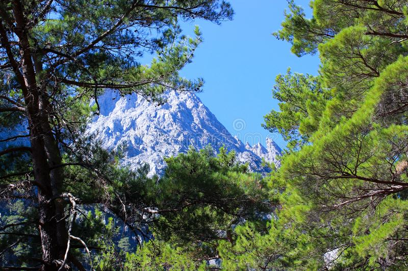 The photo. Mountain landscape. Spruce branches with cones in the foreground, in the background mountains and sky. stock photos