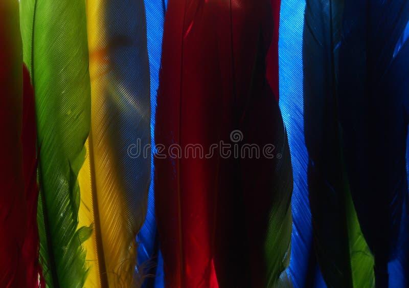 Photo of multi-colored feathers. Background image stock image