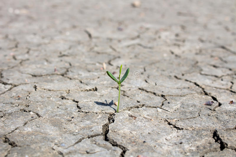 Photo new life plant dry areas, Concept and Ideas About Drought stock image