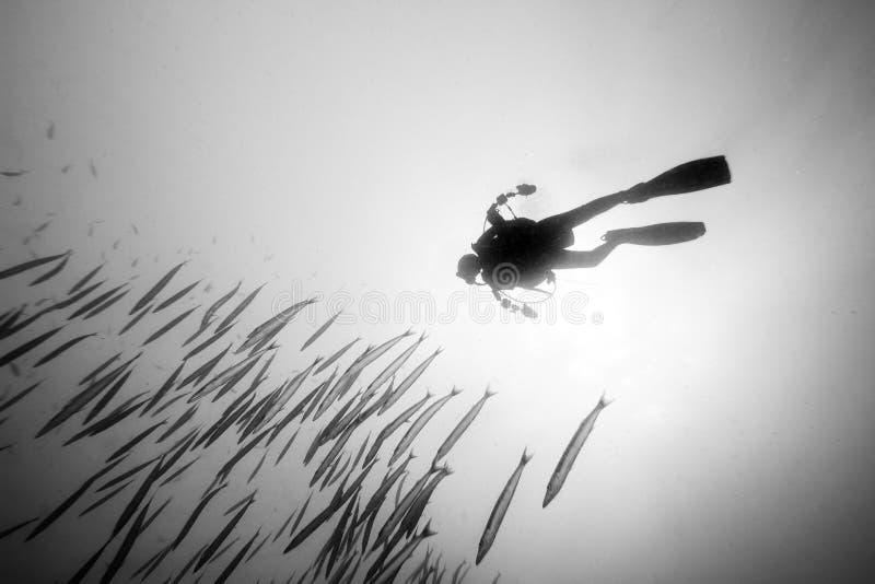 Photo noire et blanche de plongeur autonome photographie stock libre de droits