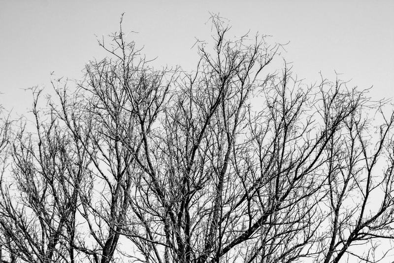 Photo noire et blanche des branches d'arbre photographie stock