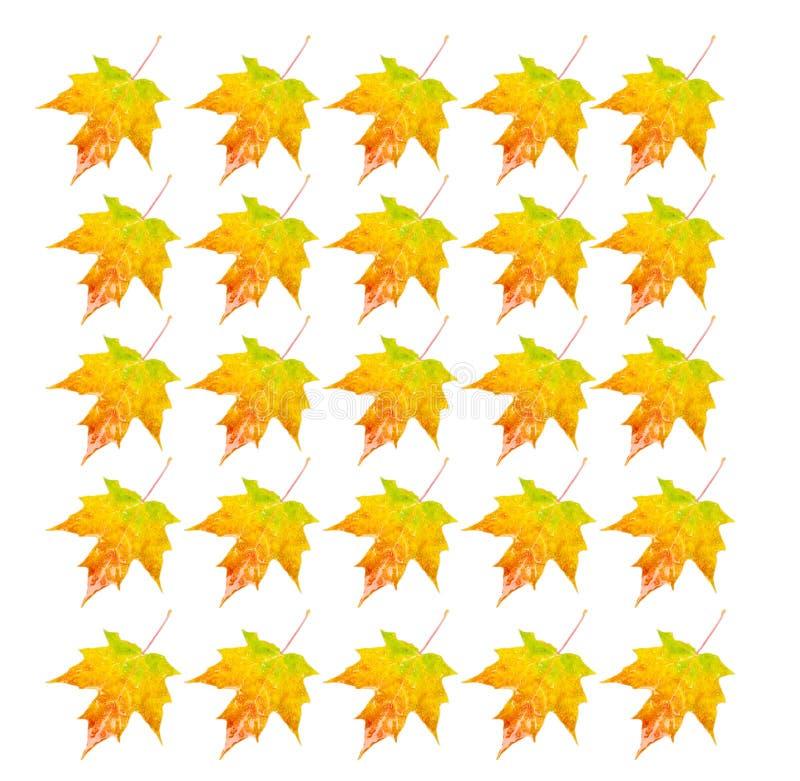 Photo Object - Autumn Leaf Stock Images