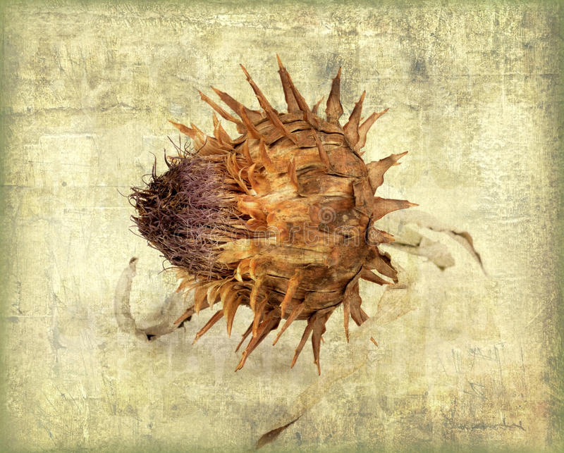 Download Photo in old image style. stock photo. Image of cynara - 26546820