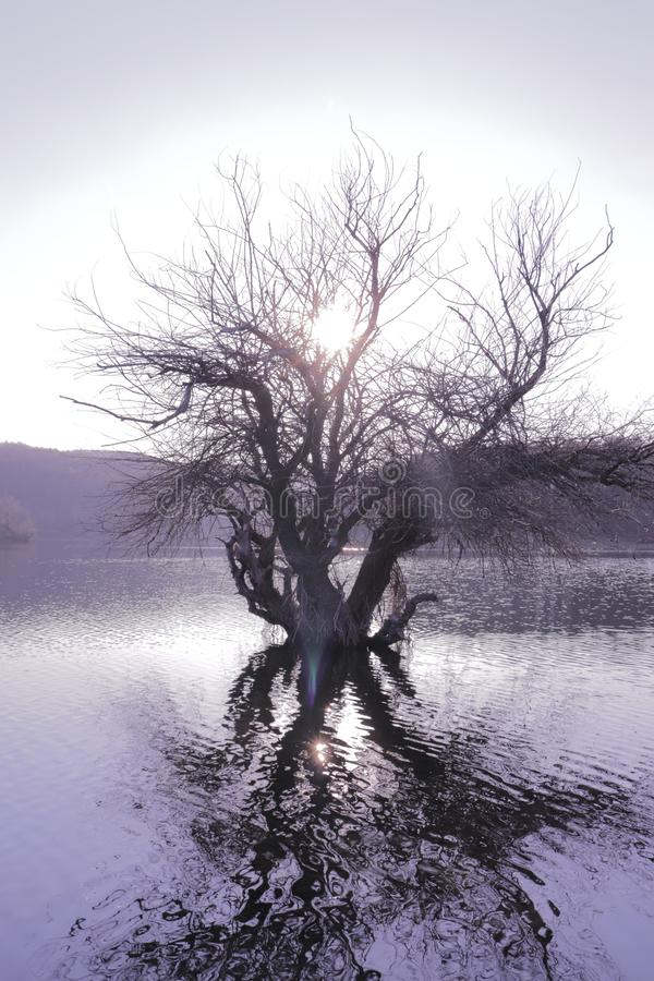 Old Tree in a lake with sunlight. This is photo of Old Tree in a lake with sunlight in southeastern Europe stock image