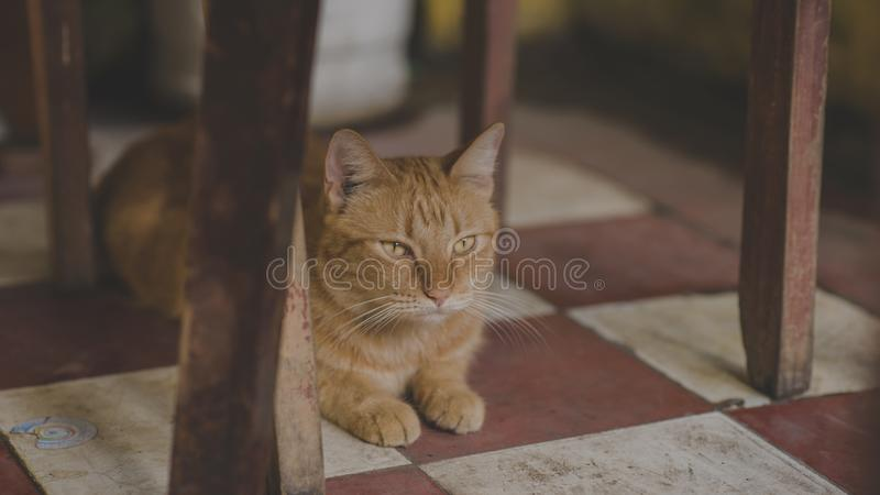 Photo of Orange Tabby Cat Under Chair stock image