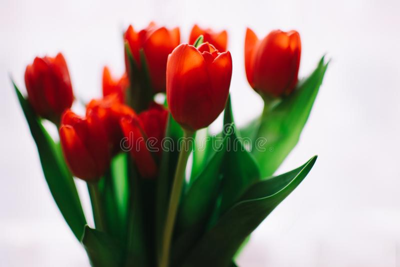 Photo Of Orange Tulips Free Public Domain Cc0 Image