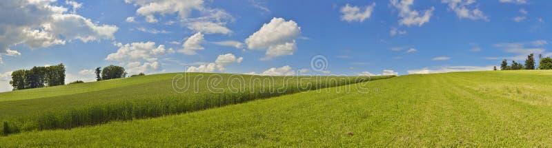 Photo panoramique avec le champ de maïs et le ciel bleu images stock