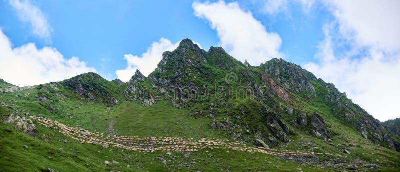 Photo panoramique des montagnes rocheuses et des pentes vertes magnifiques avec la marche blanche de moutons et beau ciel bleu de photo stock
