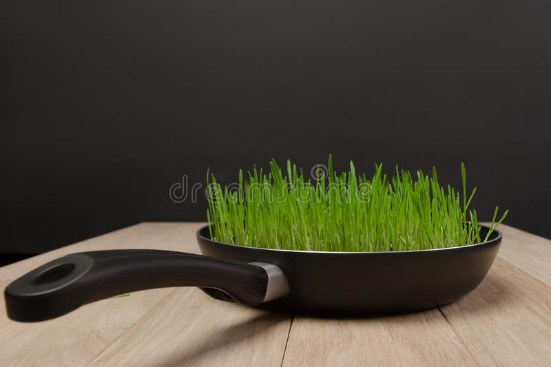 Photo pans with sprouted wheat grains stock photos