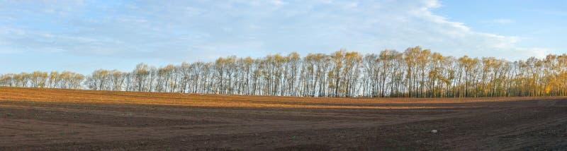 Photo 3032 par 11.300 pixels Peupliers en automne Ruelle des arbres image libre de droits
