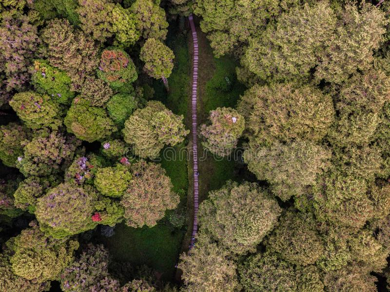 Photo of a path in the forest from above royalty free stock photos