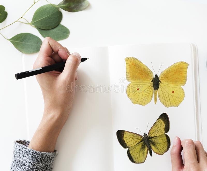 Photo of a Person Drawing a Butterfly royalty free stock image