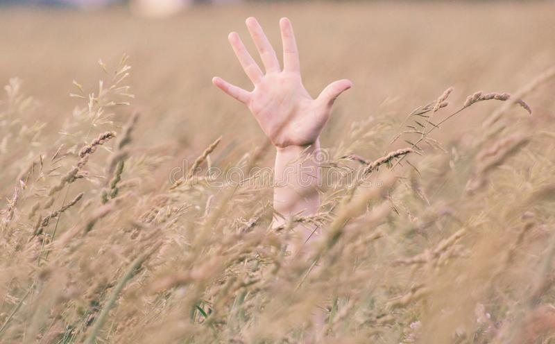 Photo of Person's Right Hand in Field stock images