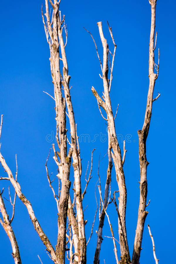 Single old and dead tree branch royalty free stock photo
